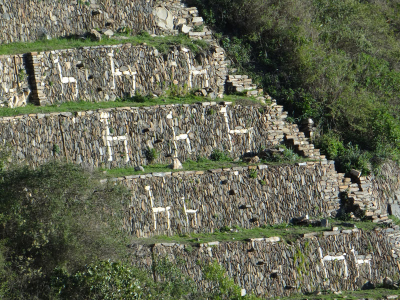 Llamas in Choquequirao