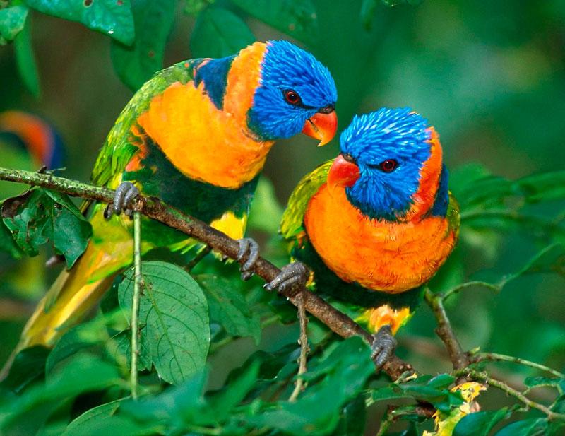 Birds in Manu